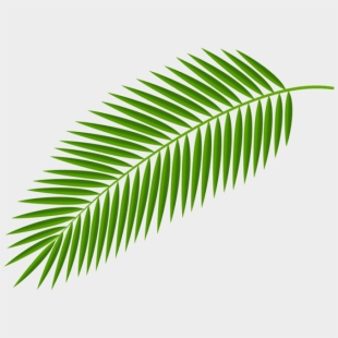 Palm Clipart Green Branch Transparent Background Palm Leaves Png Cliparts Cartoons Jing Fm Polish your personal project or design with these tropical leaf transparent png images, make it even more personalized and more attractive. transparent background palm leaves png