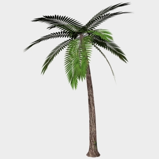 Palm Tree Transparent Background Cliparts & Cartoons For