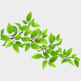 vector tree branch with leaves   Tree drawing, Tree stencil, Vector trees