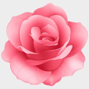 Rose Bush, Pink Roses, Yandex Disk, Art Things, Clip - Rose Bush