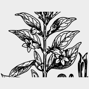 Shrub Bushes Clipart Plant Garden - Cartoon Bush Png , Transparent